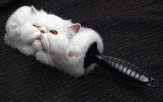 Когда кот линяет: 2 совета по минимизации шерсти в квартире