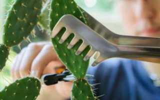 6 шагов, чтобы вырастить и размножить собственные кактусы