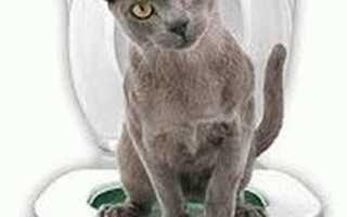 Как приучить кота к унитазу: окончательное решение туалетного вопроса для питомцев