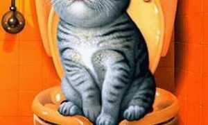 Унитаз для кошек – максимум комфорта для мохнатого члена семьи