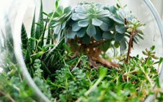 Комнатные растения, которые приманят деньги в ваш дом