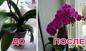 7 вещей, которые вы делаете зря при уходе за орхидеей
